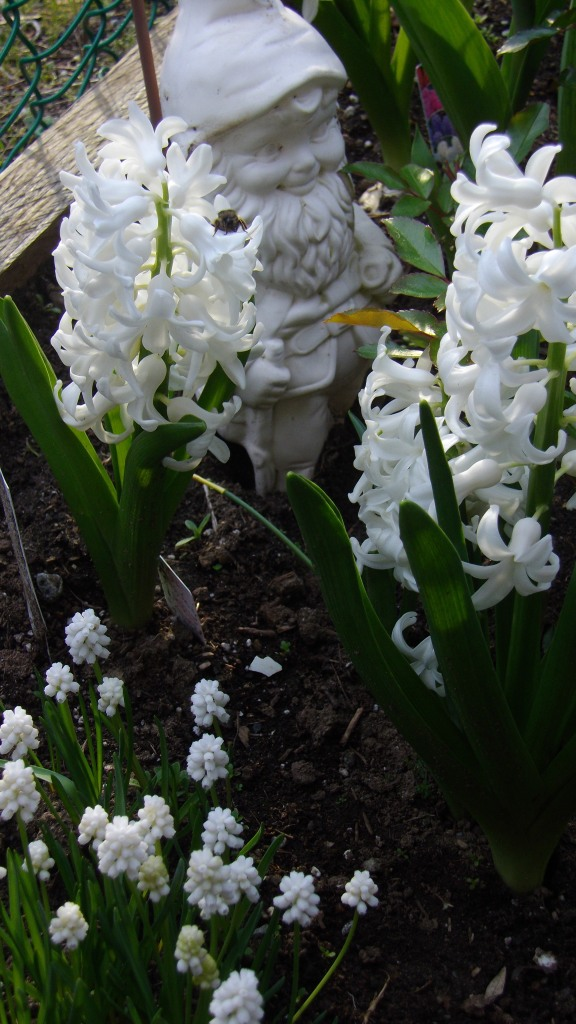 april garden photos 041